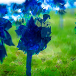 Matthew Gaston   The Sheridan PressA close up of a multiple exposure of the 1,000 pinwheels planted in the lawn at Sheridan High School to raise awareness for child abuse prevention Wednesda ...