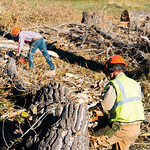 Matthew Gaston | The Sheridan PressJoseph Decker, right, and Alex Kollekowski clear branches from a felled tree before starting in on the trunk Tuesday, Oct. 16, 2018.