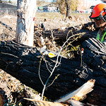 Matthew Gaston | The Sheridan PressAfter the tree has been felled, Joesph Decker begins the work of carving the trunk up into smaller, more manageable pieces for removal Tuesday, Oct. 16, 20 ...