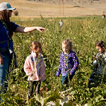 Matthew Gaston | The Sheridan PressMeadowlark Elementary school teacher Janelle Dill assists students, from left, Savannah Stewart (5), Addyson Zinda (5), and Mylle Gillis find pumpkins for  ...