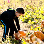 Matthew Gaston | The Sheridan PressMeadow Lark Elementary kindergartner Griffon Cherry (5), searches for the perfect pumpkin for a class project at the Koltiska's Pumpkin Patch on Tuesday, ...