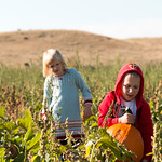 Matthew Gaston | The Sheridan PressKatie VanHouten (5), left, looks on as her classmate from Meadowlark Elementary, Rayden Lawler (5), right, wrangles his pumpkin from the patch on Tuesday,  ...