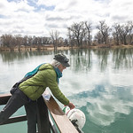 Courtesy photo | Tim MazeMeg Maze, Tongue River Elementary School teacher, empties a bucket of young rainbow trout into Rotary Park Pond in Ranchester March 25, 2020. Maze usually takes stud ...