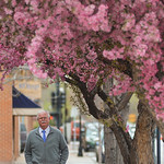 Justin Sheely | The Sheridan Press Bob De Fries walks under flowering trees on his way out of the office Wednesday morning on Brundage Street in downtown Sheridan.