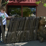 Justin Sheely | The Sheridan Press Ten-year-old Grace Hinton, volunteering with the Big Horn Cowboys 4-H Club, picks up chairs to set out during the Famers Market Thursday on Grinnell Plaza.