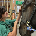 Justin Sheely | The Sheridan Press CHAPS intern Rebecca Reyer, 14, combs the hair on Tilli during the CHAPS Spring Horse Show Wednesday at CHAPS. CHAPS – Children, Horses and Adults in Par ...