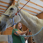 Justin Sheely | The Sheridan Press CHAPS intern Lexi Rainer, 13, brushes a horse named Jedi during the CHAPS Spring Horse Show Wednesday at CHAPS. CHAPS – Children, Horses and Adults in Pa ...
