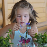 Justin Sheely | The Sheridan Press Five-year-old Taylor Babione picks out flower to press during Tidbit Tuesday at the Sheridan County Museum. The children learned about the importance of pr ...