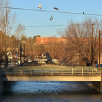 Justin Sheely | The Sheridan Press Birds fly over the Little Goose Creek in downtown Sheridan Friday morning.