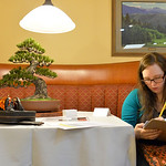 Justin Sheely | The Sheridan Press Show judge Annie Libertini writes notes next to a leather Goyo Matsu (pine white) Bonsai tree made by japanese crafter Takeshi Yonezawa during the annual R ...