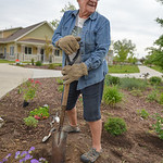 Justin Sheely | The Sheridan Press Bridge Creek resident Connie Gray digs a hole for a flowering plant as neighbors work on their community flower garden at the Bridge Creek community next t ...