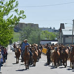 Justin Sheely | The Sheridan Press Wranglers guide horses up 5th street as onlookers watch the action during Eaton's annual spring horse drive Sunday in downtown Sheridan.