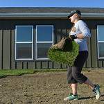 Justin Sheely | The Sheridan Press Charlie Reid picks up sod during a work day at the Baker's Habitat for Humanity home on Saturday. Teachers and staff from Meadowlark Elementary volunteer ...