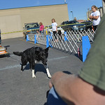 Justin Sheely | The Sheridan Press A dog named Grizzly pulls a wagon full of dog food to his owner during the fourth-annual Dog Weight Pull contest Saturday at Muddy Paw Prints Pet Supply.