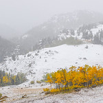 Justin Sheely | The Sheridan Press Aspen trees stand out from the snowy countryside Saturday afternoon in the Bighorn National Forest. Burgess junction reported up to 6 inches of accumulatio ...