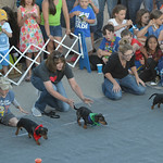 Justin Sheely | The Sheridan Press Dogs break from the starting line during the annual Wiener Dog Race at Black Tooth Brewing Company Tuesday, June 12, 2018. The event was hosted for the six ...