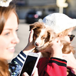 Matthew Gaston   The Sheridan Press2018 Miss Teen Wyoming Taylor Greig left could not resist the charm Newt, 4-year-old Hayden Peirce's new puppy at the Tongue River Valley Ugly Sweater Ru ...