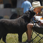 Justin Sheely | The Sheridan Press Bill Mathews of Lovell receives a kiss from his dog Darwin during the Summer Festival Saturday at Antelope Butte ski area. The Antelope Butte Foundation ho ...