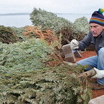 Justin Sheely | The Sheridan Press Volunteer George Olovich ties a tree to a brick at the staging area for building fish habitat Saturday morning at Lake De Smet. This is the fourth year the ...