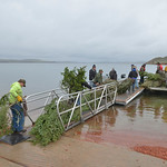 Justin Sheely | The Sheridan Press Volunteers bring the weighted trees to the flat boat for building fish habitat Saturday morning at Lake De Smet. This is the fourth year the Wyoming Game a ...