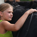 Justin Sheely | The Sheridan Press Nine-year-old Amia Koltiska rubs her show cow Raven on Wednesday at the Koltiska farm west of Sheridan.