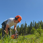 Justin Sheely | The Sheridan Press Volunteer Scott Badley cuts down growth on a ski run during a workday Saturday at Antelope Butte ski area in the Bighorn mountains. Dozens of volunteers fr ...
