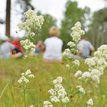 Justin Sheely | The Sheridan Press The Wyoming Wilderness' Young Ambassador Program sits in a meadow Friday morning in the Bighorn National Forest. Bruce Scigliano lead the group in an exe ...