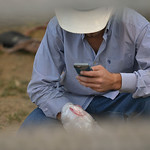 Justin Sheely | The Sheridan Press A cowboy checks his phone behind the bucking chutes during the Sheridan WYO Rodeo at the Sheridan County Fairgrounds Saturday, July 14, 2018.